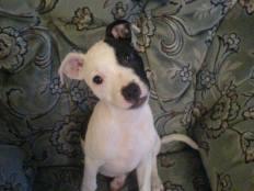 Stella puppy reference photo